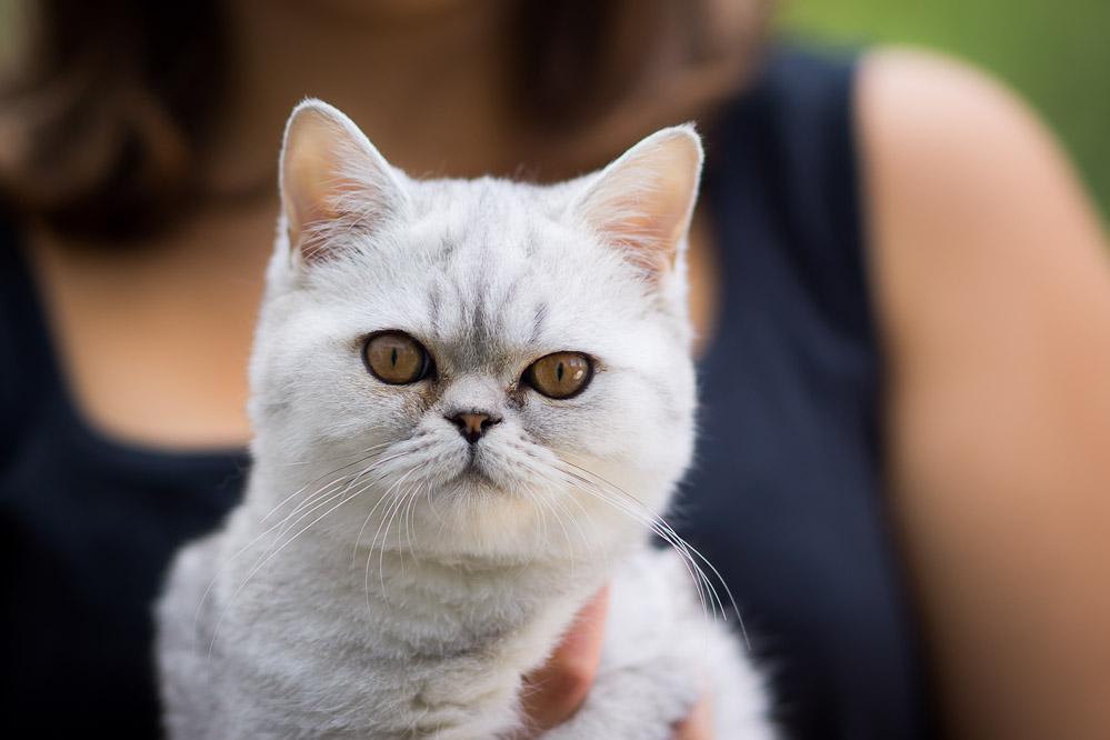 Bokeh-Delicious - oder auch: Die muckschende Katze