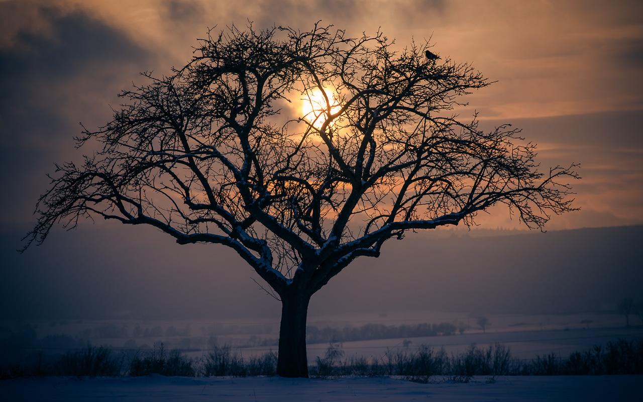 kostenloses Hintergrundbild Taunus Winter Sonnenuntergang