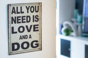All_what_you_need_is_Love_and_a_Dog_01